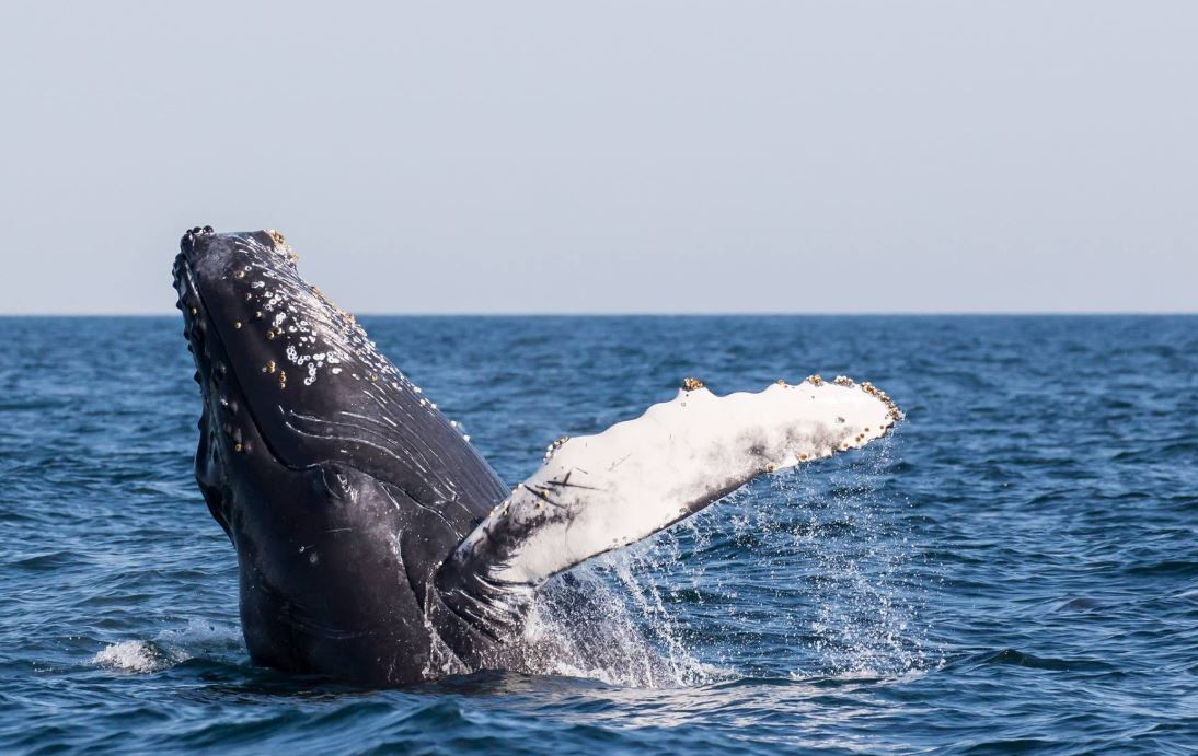 Best Whale Watching Tours In Massachusetts