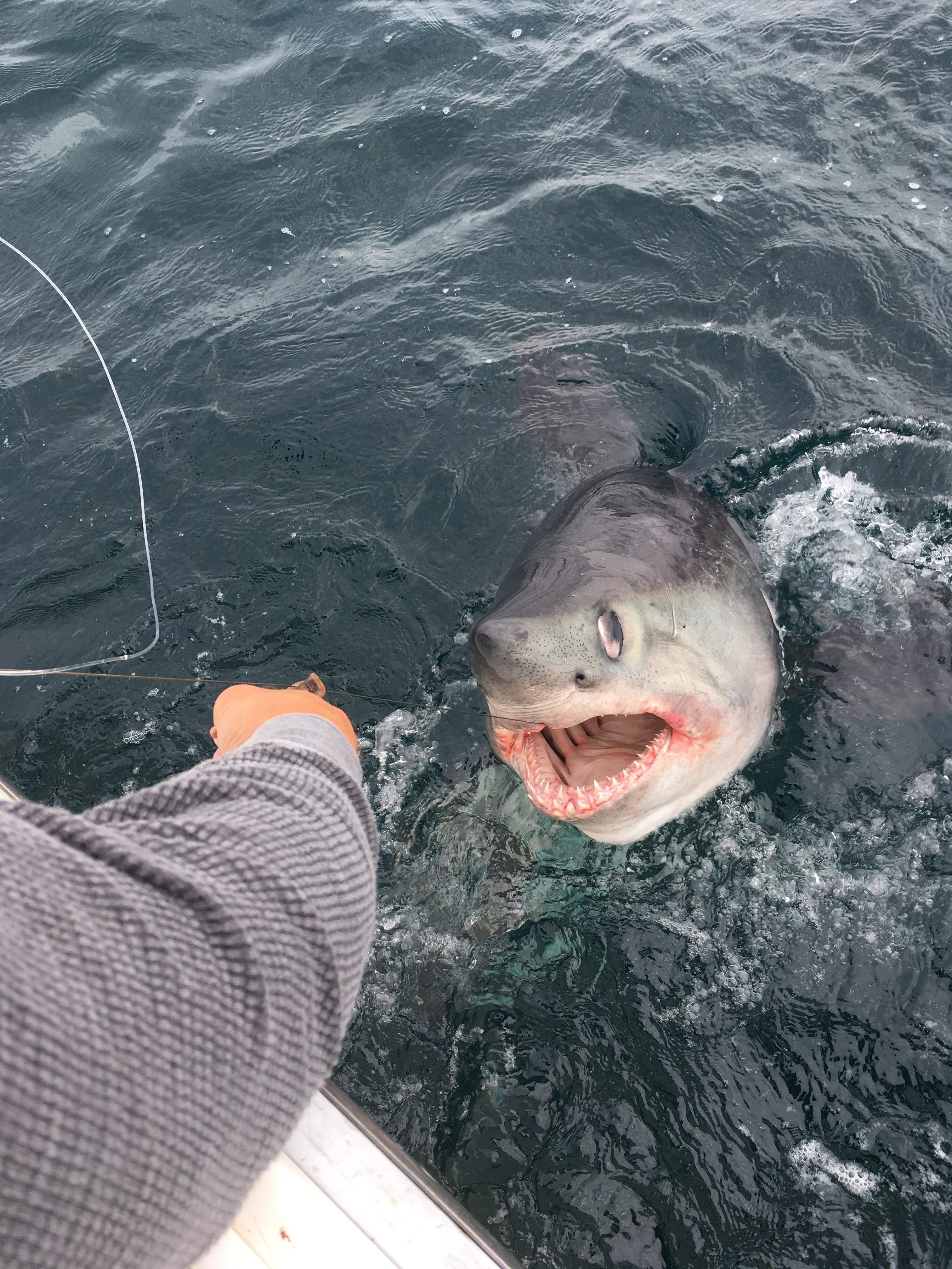 Deep sea fishing ma the best sea of 2018 for Cape cod fishing party boats